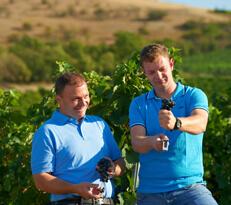 Werner und Christian Pitthan prüfen die Qualität der Trauben
