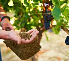 Bester Boden für Wein