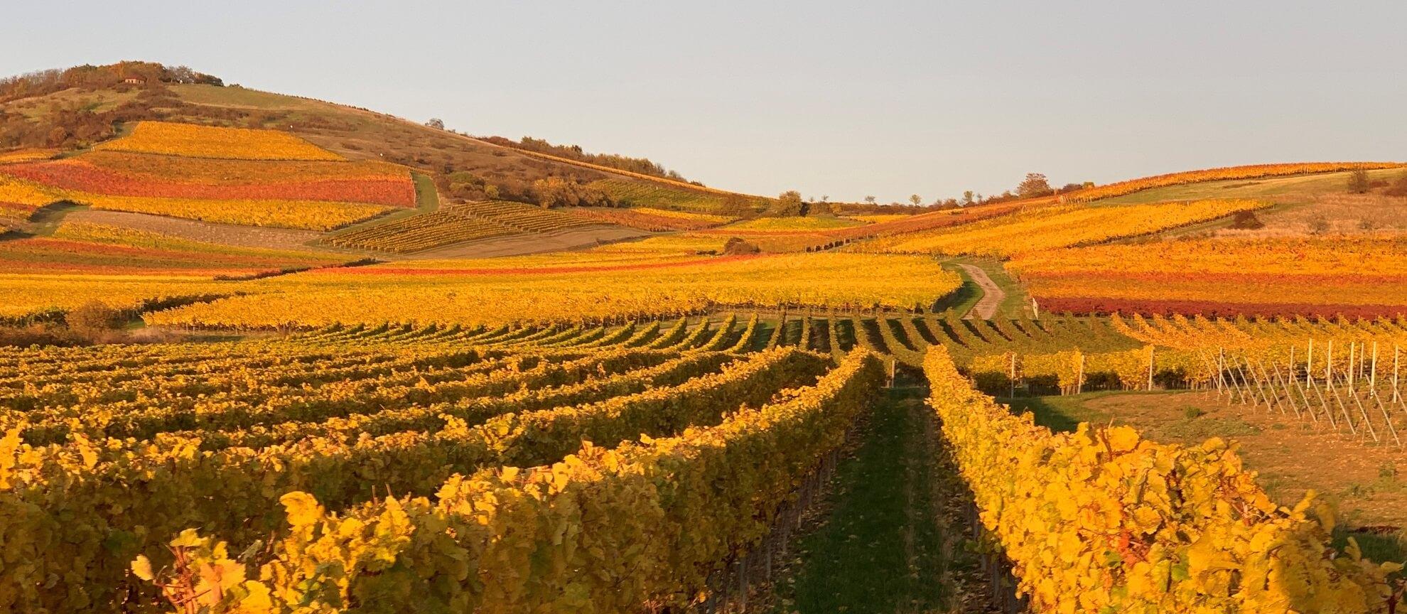 Herbst bei Zotzenheim